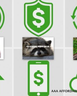 How Much Does Raccoon, Squirrel & Skunk Removal Cost in Toronto