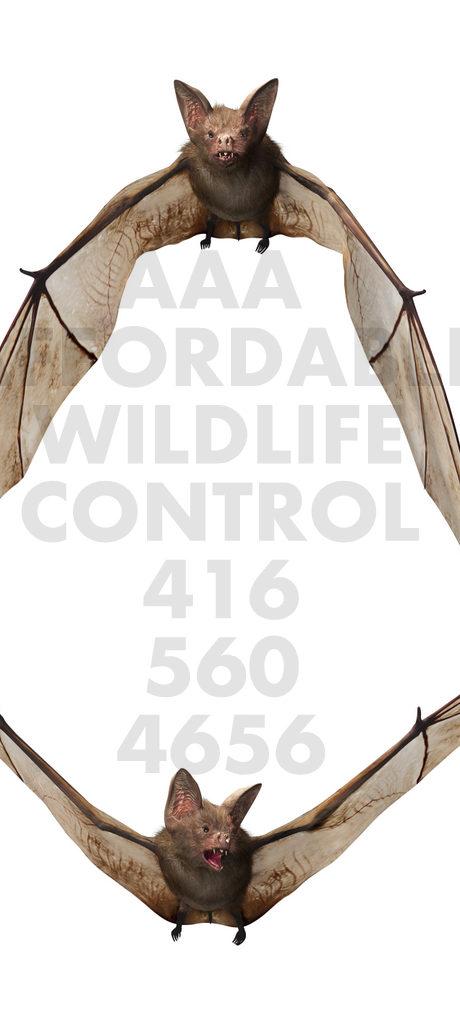 BAT REMOVAL - WILDLIFE REMOVAL TORONTO - bat removal Toronto