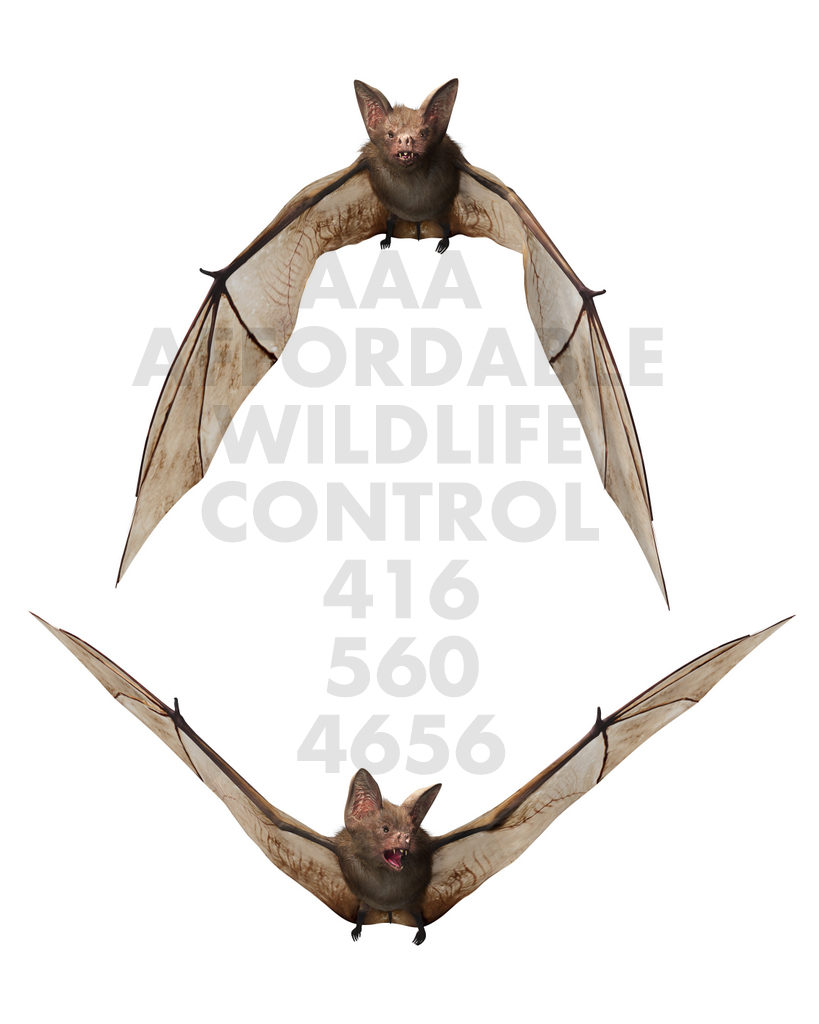 BAT REMOVAL - WILDLIFE REMOVAL TORONTO - bat removal Toronto